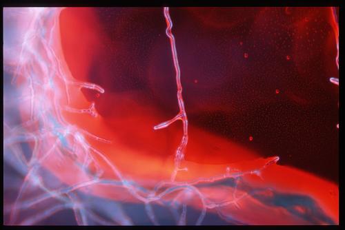 Mikroskopische Aufnahme 04