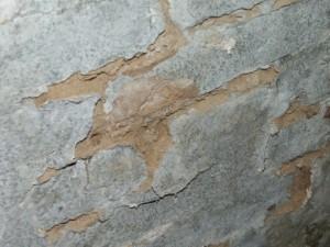 Pilzbildungen an einem feuchten Kellermauerwerk
